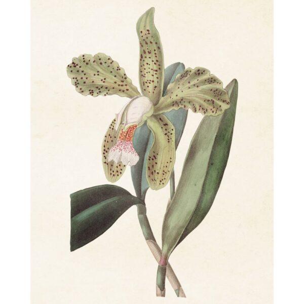 """Poster """"Orchidé"""""""
