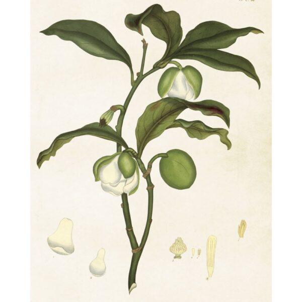 Poster med bild på vit magnolia