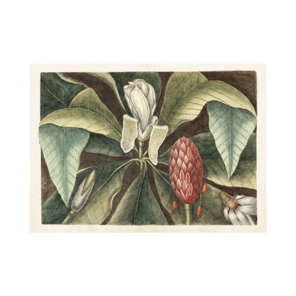 """Poster """"Magnolia knopp"""""""