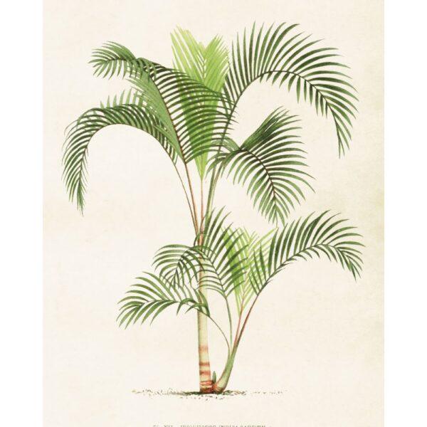 """Poster """"Palmträd"""""""