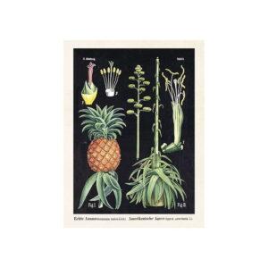 Poster med bild på ananas