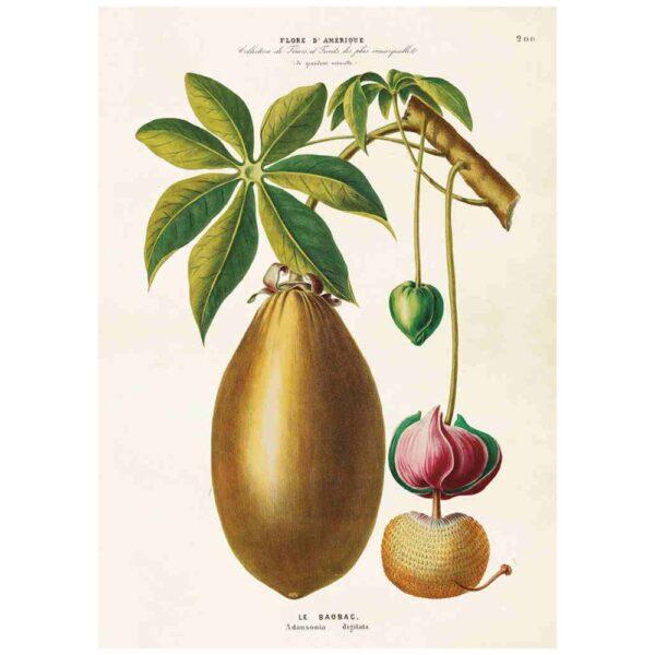 Poster med bild på Baobab