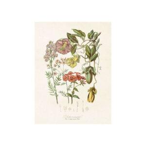 Poster med bild på blomsteräng