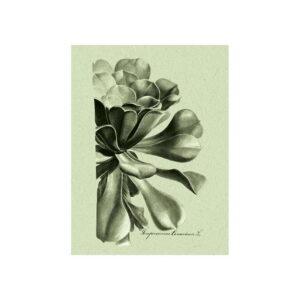 Poster med bild på botaniska illustrationer i gröna toner