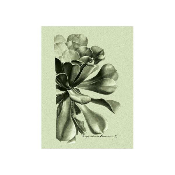 Botaniska illustrationer grön