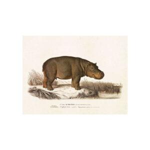 Poster med bild på flodhäst