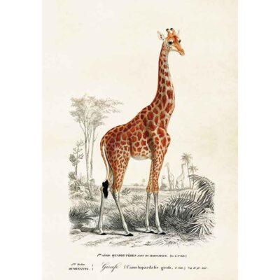 Poster med bild på giraff