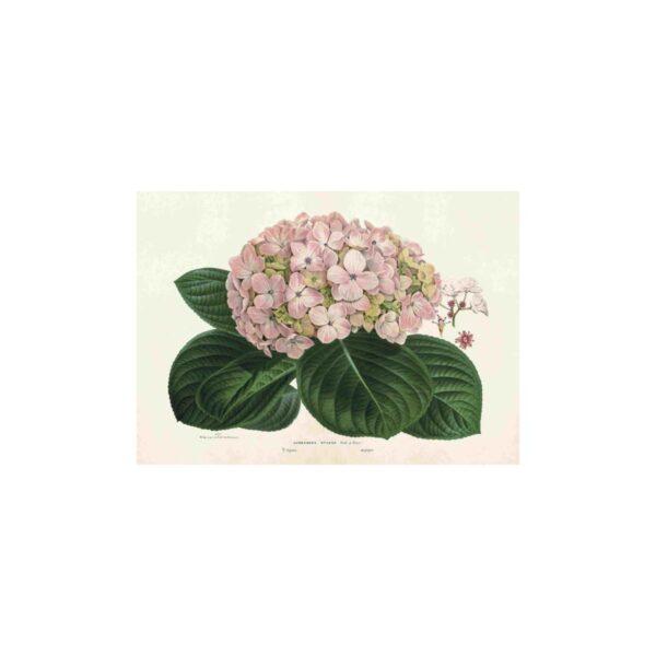 Poster med bild på hortensia