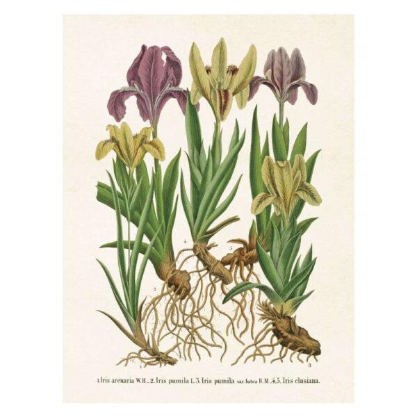 Poster med bild på iris