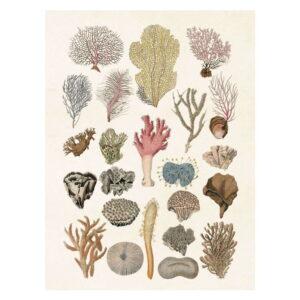 Poster med bild på koraller
