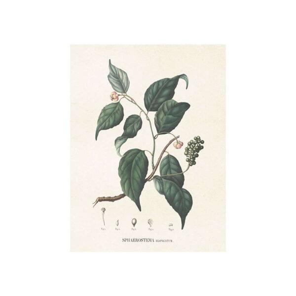Poster med bild på magnolia