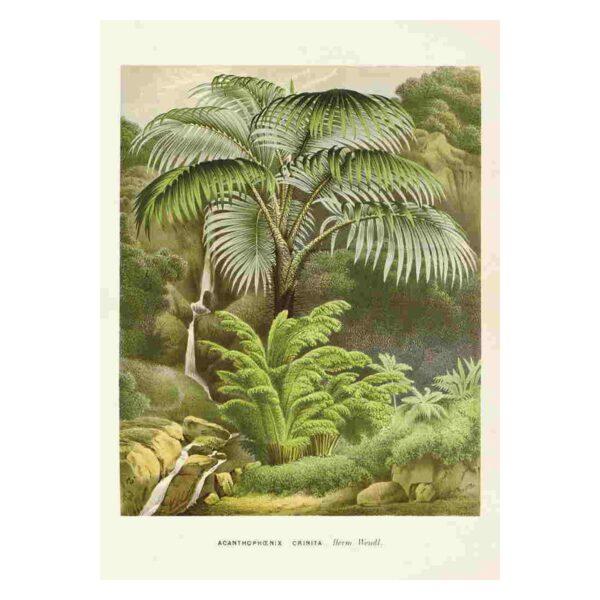 med bild på djungel & palm