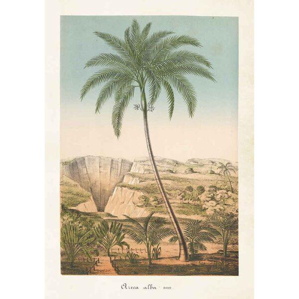 Poster med bild på palm