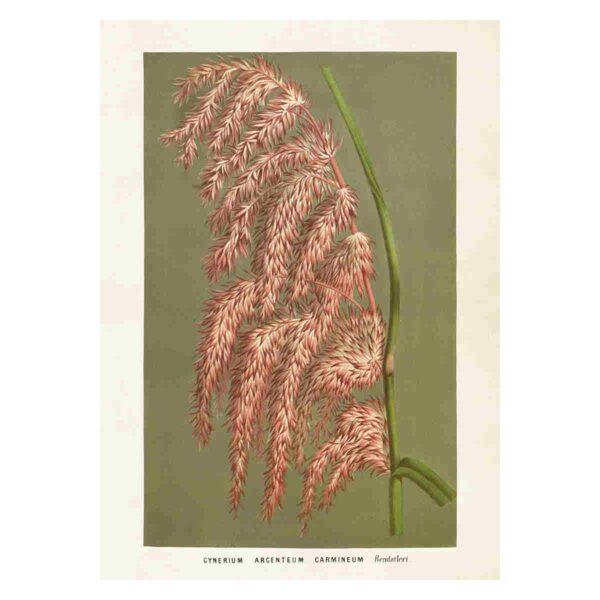 Poster med bild på pampasgräs