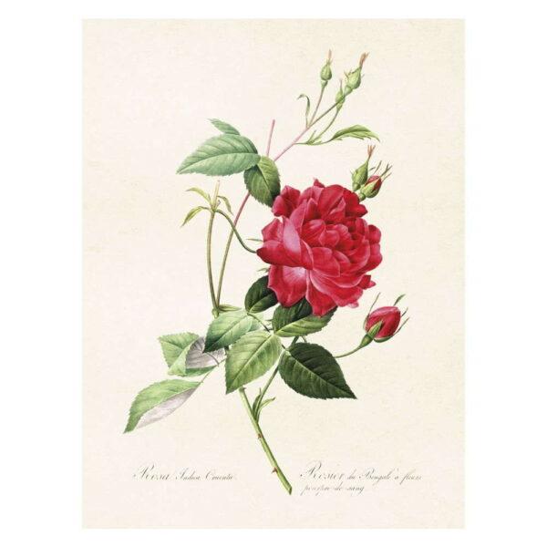 Poster med bild på ros