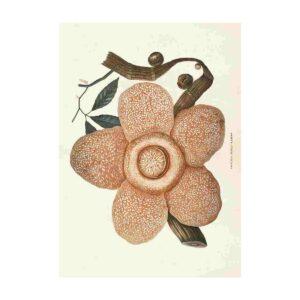 Poster med bild på rosa blomma