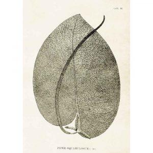 Poster med bild på svart löv