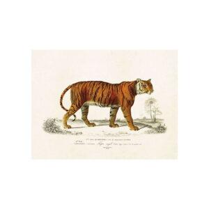 Poster med bild på tiger