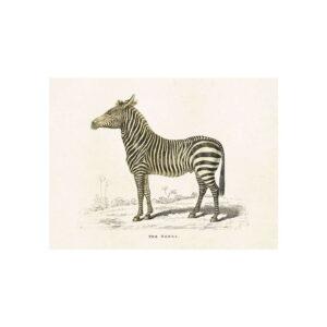 Poster med bild på zebra