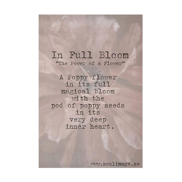 In-full-bloom-budskap