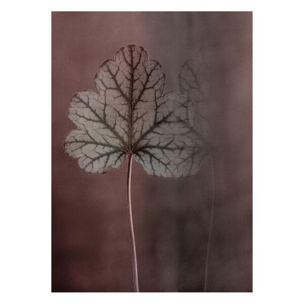 The-leaf-stor