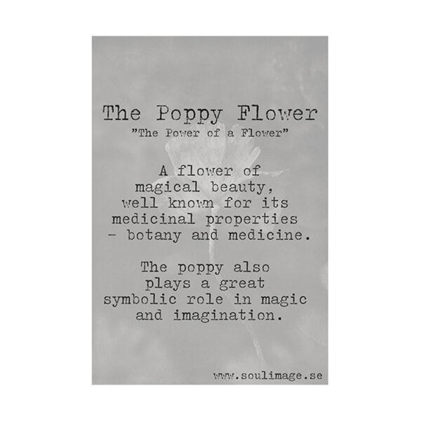 The-poppy-flower-budskap