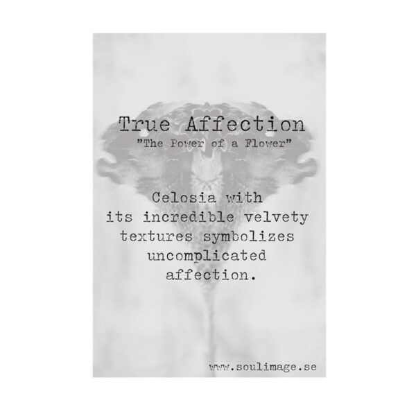 True-Affection-budskap