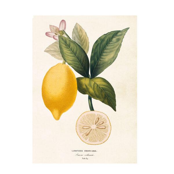Poster med citron