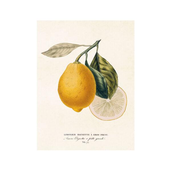 Poster med motiv av citroner