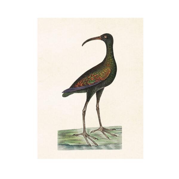 Poster-med-fågel