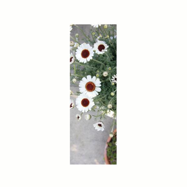 Bokmärke med vita blommor