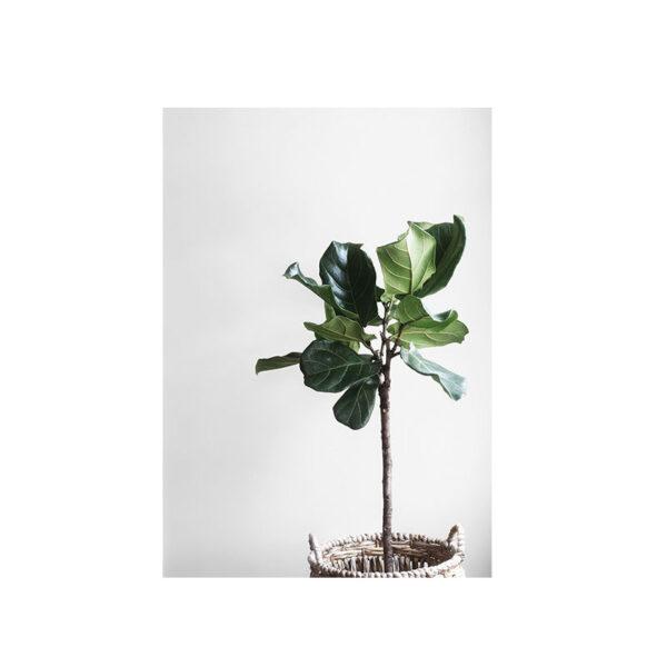 Kort med grön stor växt i en vacker korg