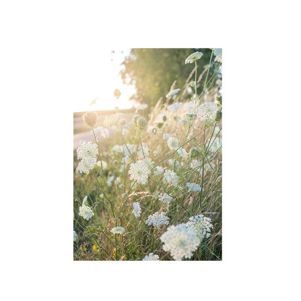Kort sommarljus med grönskande äng och blommor