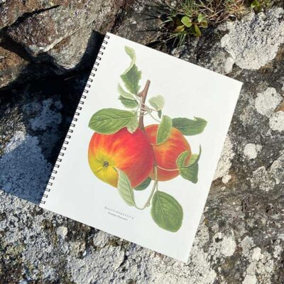 Skrivbok-med-äpplen